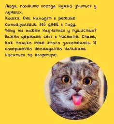 Рутина на карантине: учиться у кошек