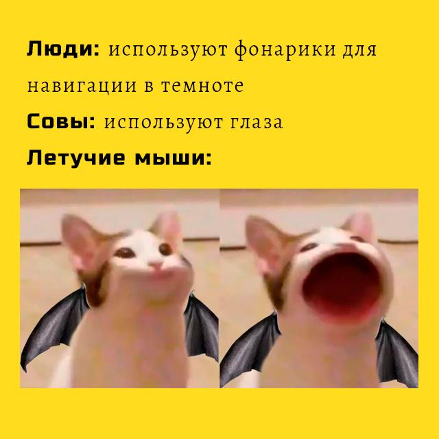 Мем - летучие мыши в темноте