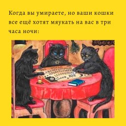 мем - кошки и их планы
