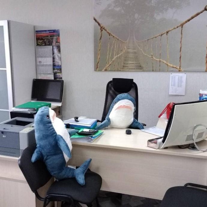 акулы из Икеи На важных деловых переговорах
