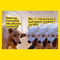 мем с белыми волками которые смеются