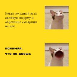 кот с большим ртом мем