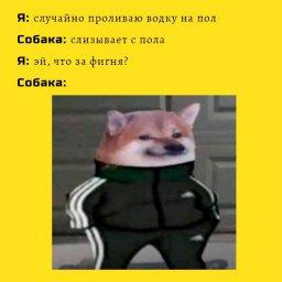 мем - когда собака попробовала водки