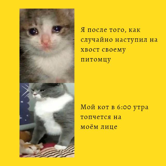 мем про кота которому случайно наступили на хвост