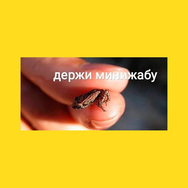 мем - держи мини жабу