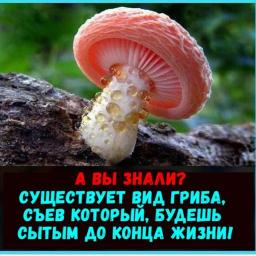 Новейший факт о грибах