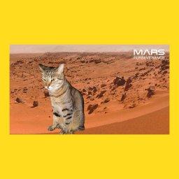 мем - марсоход - кошка на марсе