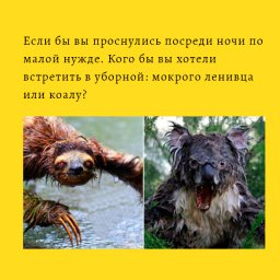 мем - мокрый коала - кого вы хотели бы встретить ночью