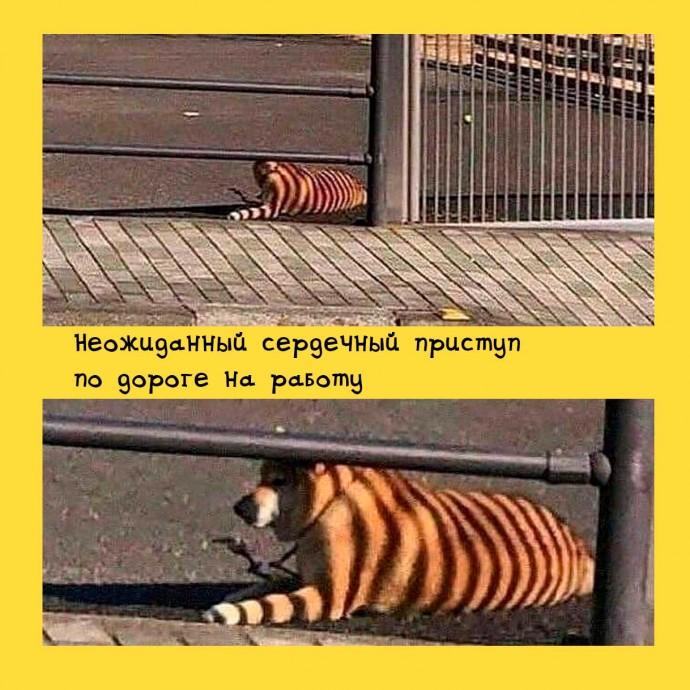 Иллюзия с собакой