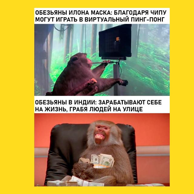 мем - обезьяна Илона Маска - d0a7ea08