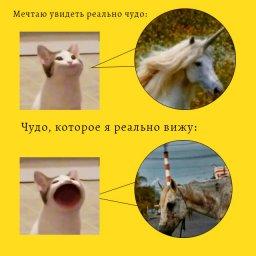 кот со ртом мем