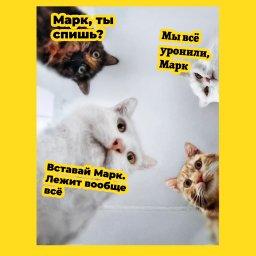 мем - падение интернет - коты будет цукерберга