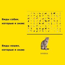 мем кошка есть кошка