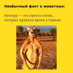 мем - поучительный факт про кенгуру