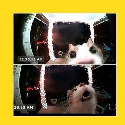 Кот смотрит в домофон - шаблон
