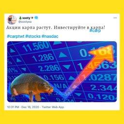 мемы про карпа - bc0c0ad9