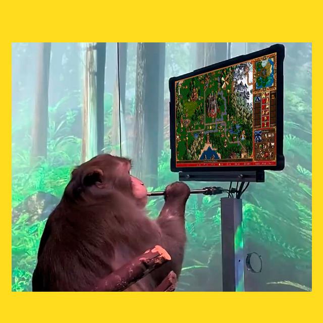 мем - обезьяна Илона Маска - fb377232