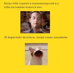 кот с круглым ртом мем