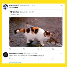 мемы про карпа - 9bea4e7f