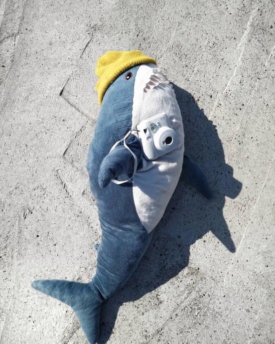 акула Блохэй фотограф