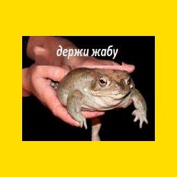-ля держи жабу