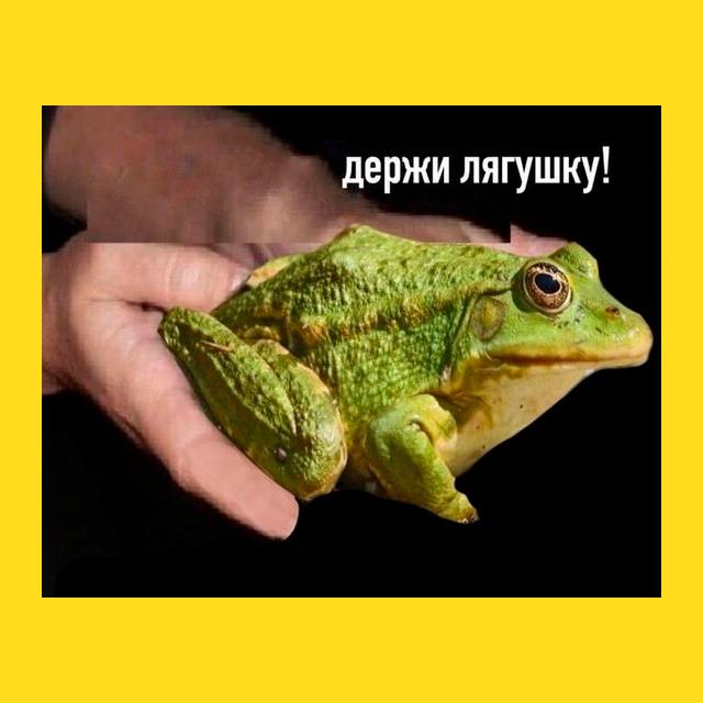 мем - держи лягушку