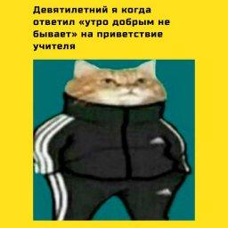мем - кот в адидасе мем