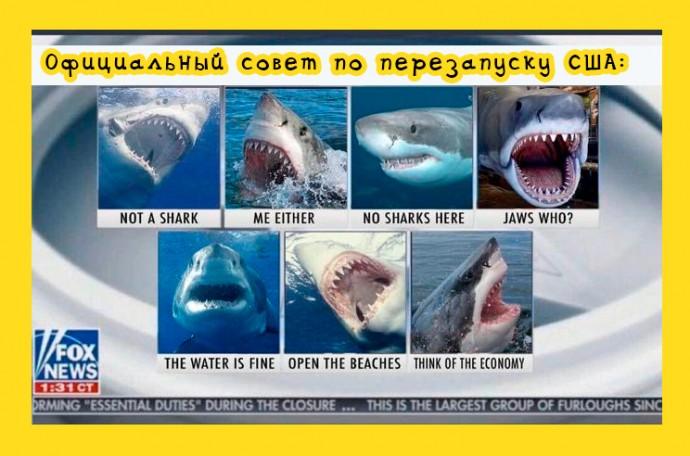 Совет перезапуска США: акулы