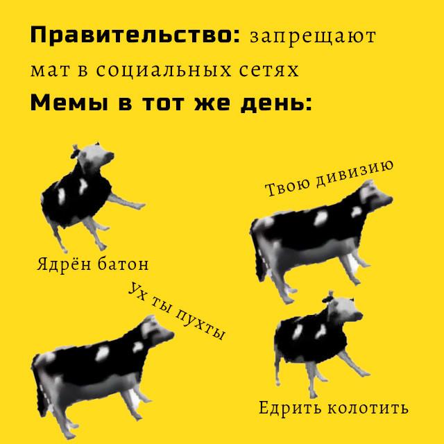 польская корова - мем