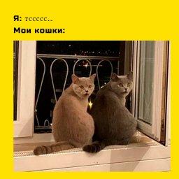 забавные мем про кошек