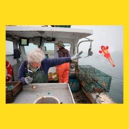 мем - женщина бросает лобстера в океан - кукла Барби