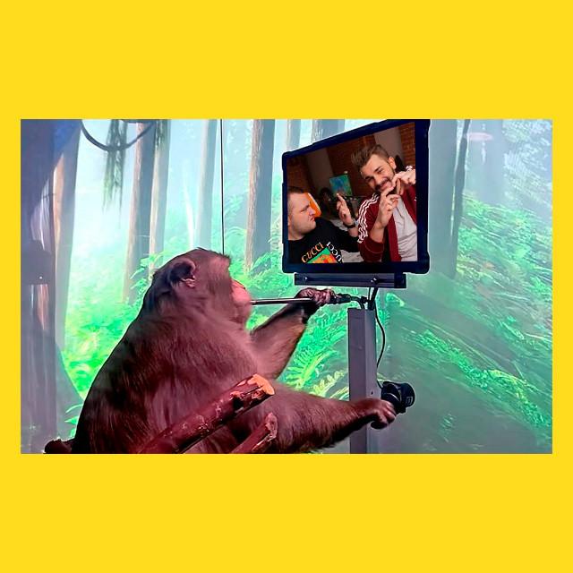 мем - Юлик и Кузьма такие хорошие - обезьяна Илона маска