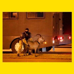 омоновец держит козла