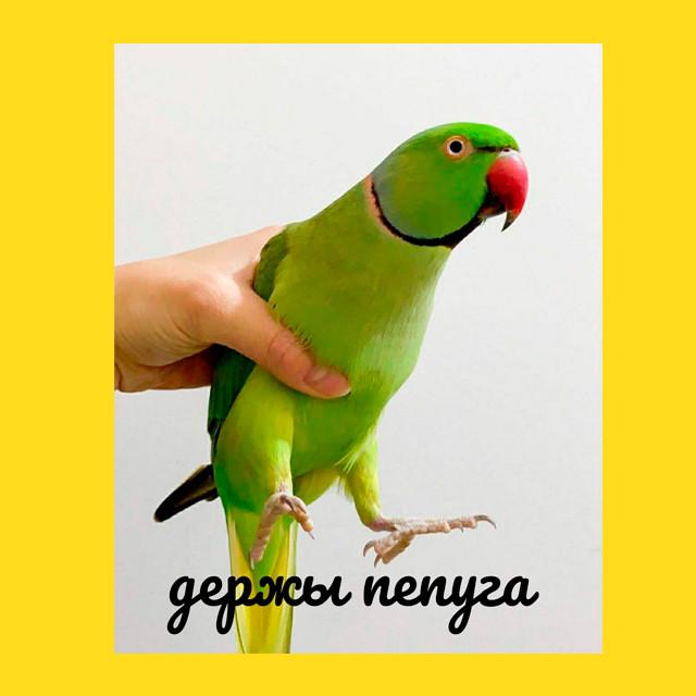 мем - держи папуга вместо жабы
