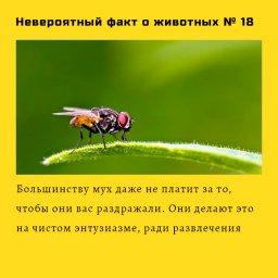 мем - сложно поверить в этот факт о мухах