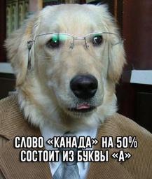 Учёный пёс о Канаде