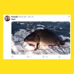 мемы про карпа - 6c0a697d