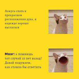 кот с широко открытым ртом мем
