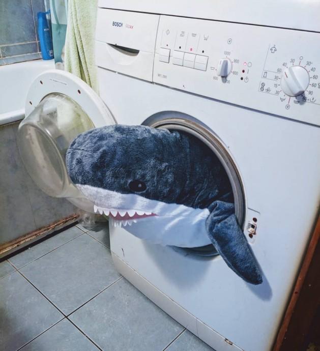пришёл постирать а там уже занято акулой
