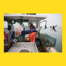 мем - женщина бросает лобстера в океан - шаблон