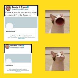 кот с широким ртом мем