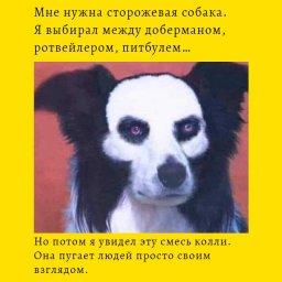 мем собака с бровями