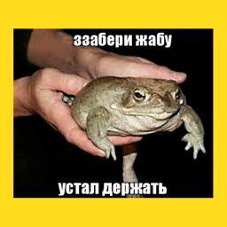 мем - забери жабу устал держать